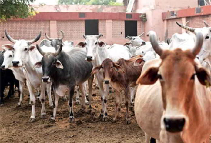 Assam new cattle Bill: No Beef Trade In 'Hindu Areas' or within 5-km radius of temple